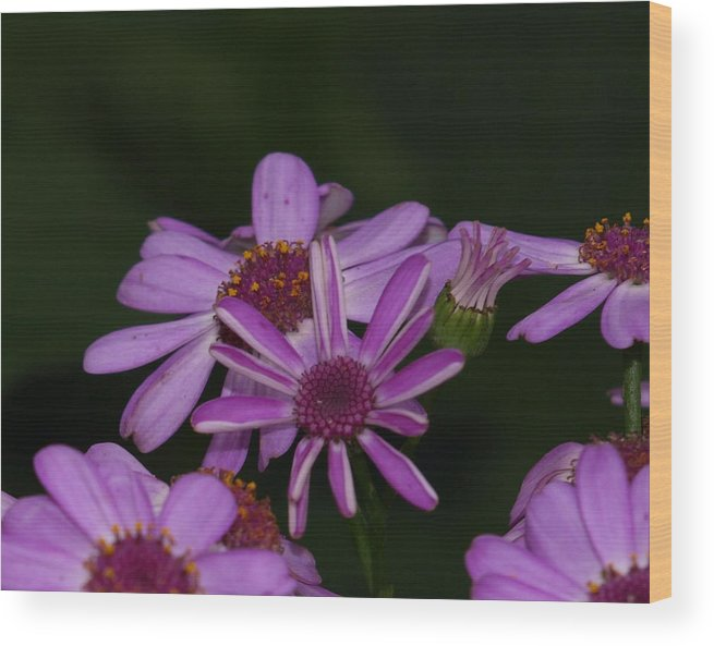 Flower Wood Print featuring the photograph Purple Passion by Laura Allenby