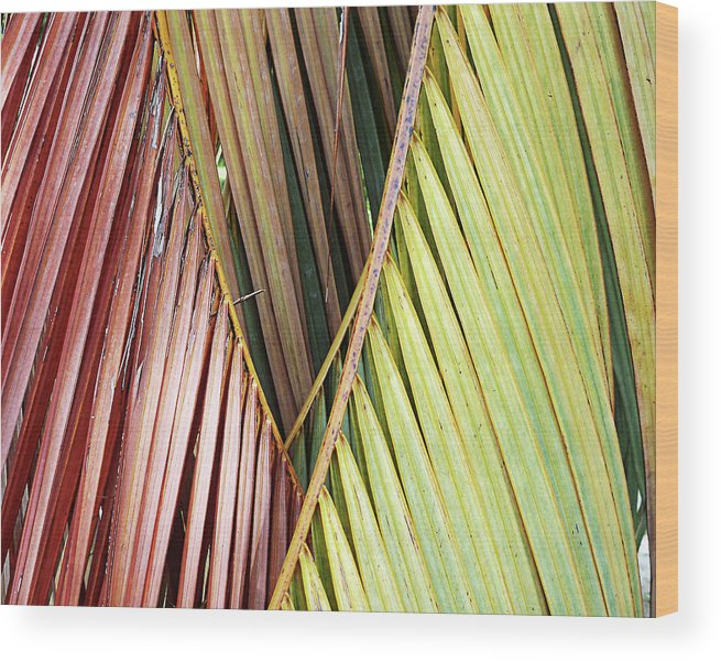 Florida Wood Print featuring the photograph Rainbow Of Palms Gp by Chris Andruskiewicz