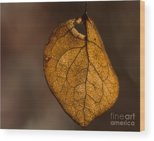 Leaf Wood Print featuring the photograph Single Fall Leaf by Alissa Beth Photography