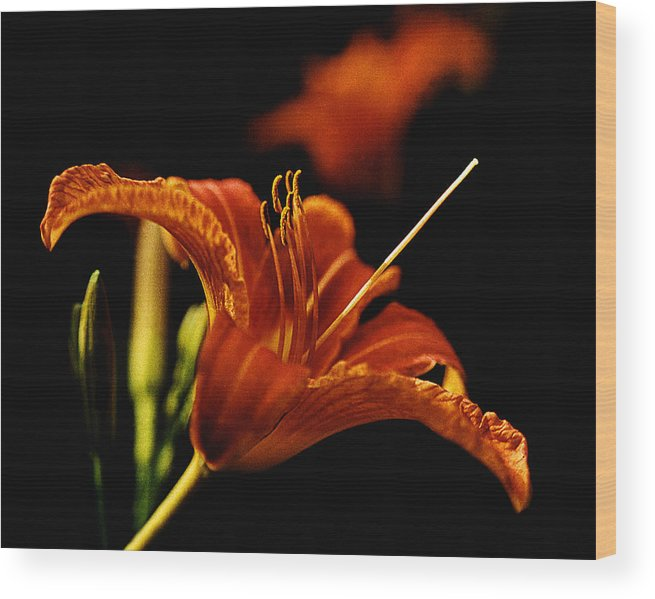 Garden Wood Print featuring the photograph Single Tiger Lily by Roger Soule