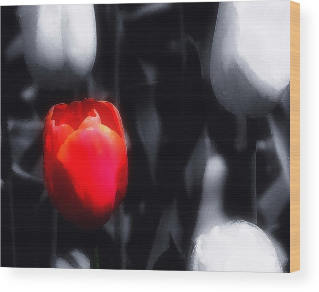 Tulip Wood Print featuring the photograph Solitary In Red by Lyle Huisken