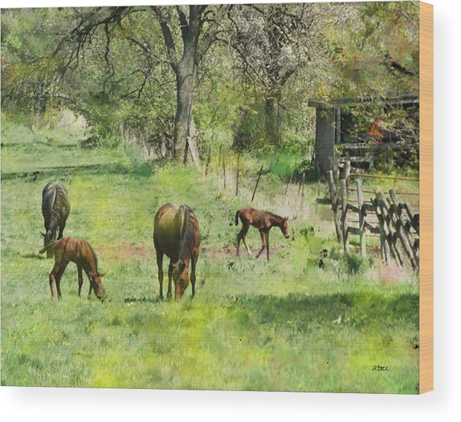 Spring Colts Wood Print featuring the digital art Spring Colts by John Beck