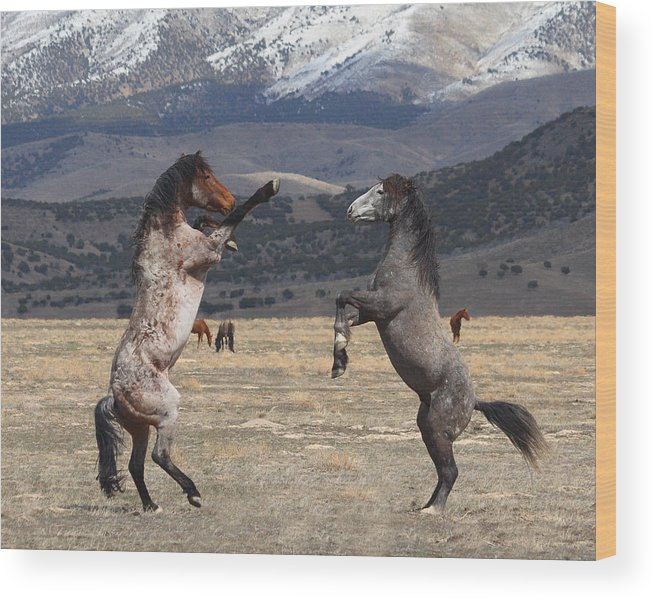 Equine Wood Print featuring the photograph Standing Tall by Gene Praag