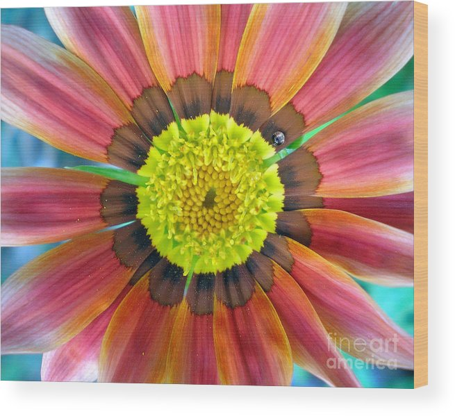 Photography Wood Print featuring the photograph Sunburst by Heather S Huston