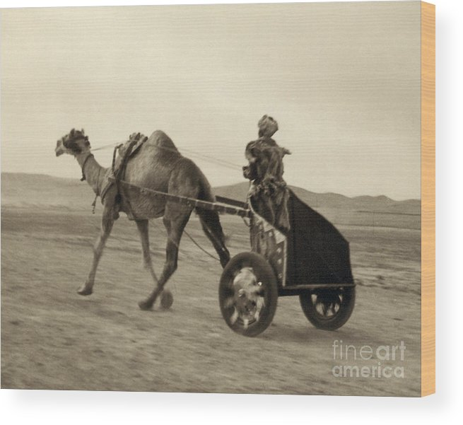 1938 Wood Print featuring the photograph Syria: Camel Race, C1938 by Granger