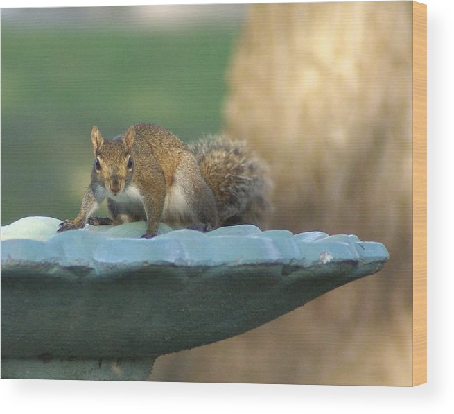 Squirrel Wood Print featuring the painting Testing The Waters by Debbie May