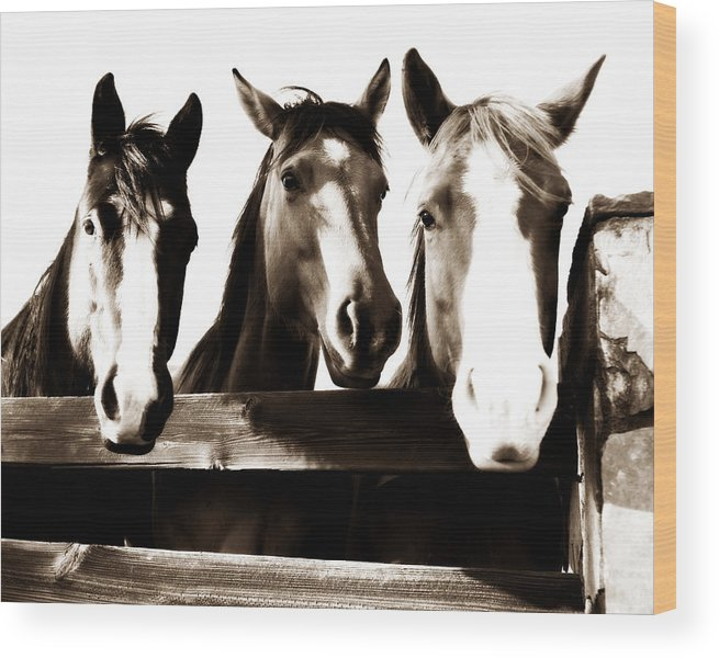 Horse Wood Print featuring the photograph The Three Amigos In Sepia by Michelle Shockley