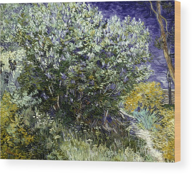 19th Century Wood Print featuring the photograph Van Gogh: Lilacs, 19th C by Granger