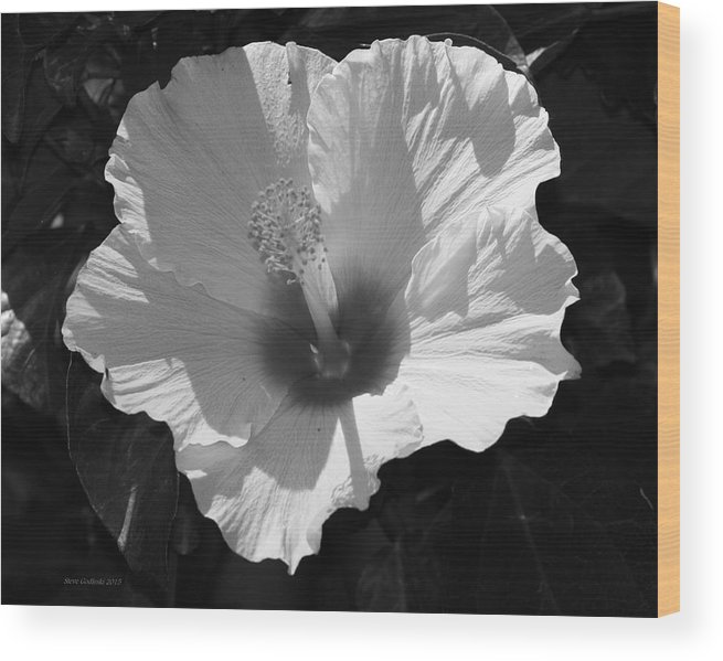 Hibiscus In Black And White For Canvas Wood Print featuring the digital art White Sunshine by Steve Godleski