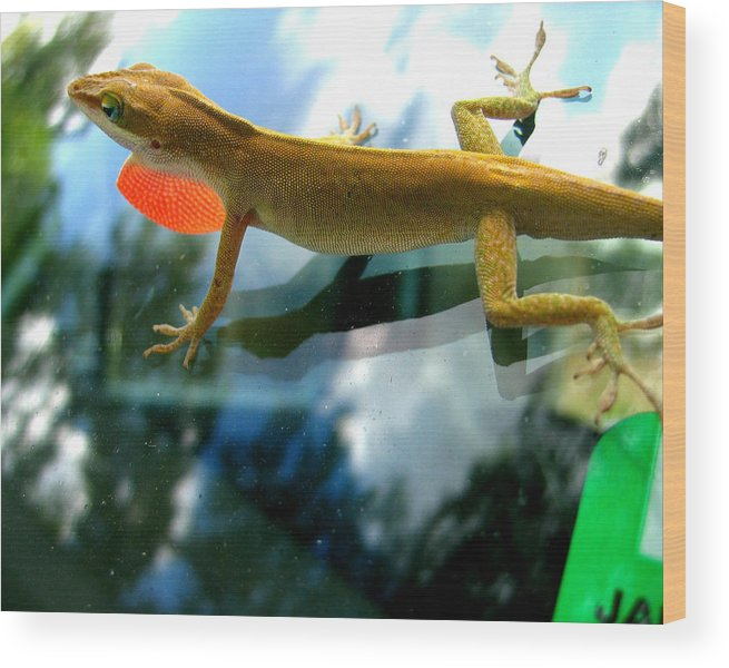 Lizard Wood Print featuring the photograph Windshield Walker by Lindsey Orlando