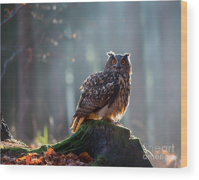 Big Wood Print featuring the photograph Eurasian Eagle Owl Bubo Bubo Sitting On by Vladimir Hodac
