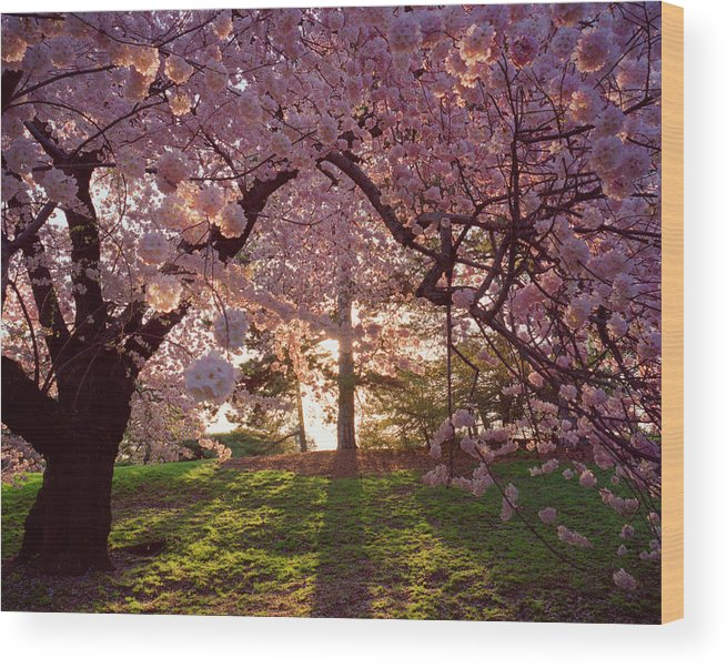 New York Botanical Gardens Nybg New Wood Print By Diane Cook And