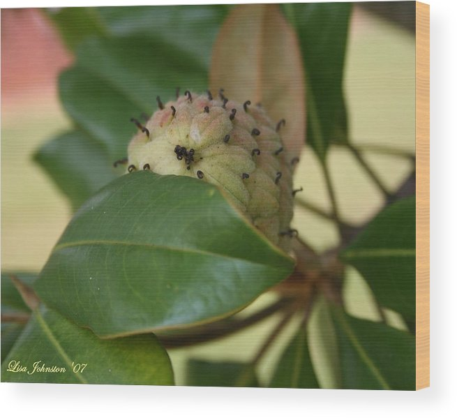 Magnolia Wood Print featuring the photograph Before The Bloom by Lisa Johnston