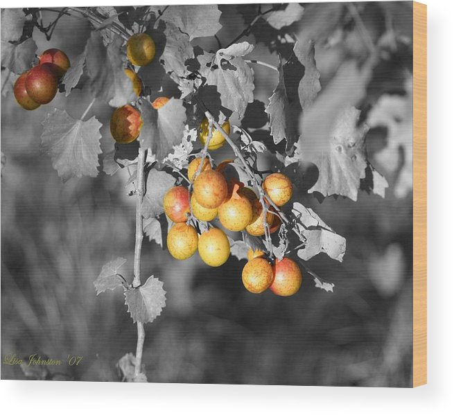Muscadine Wood Print featuring the photograph Before The Wine by Lisa Johnston