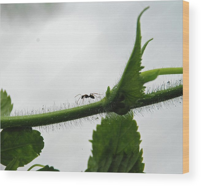 Insect Wood Print featuring the photograph A Bugs Life by Gopan G Nair
