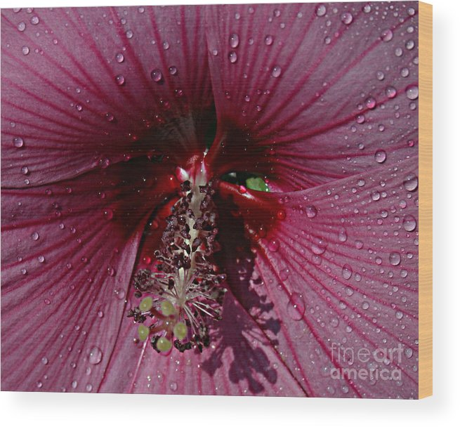 Flower Wood Print featuring the photograph After A Rain by Kathy DesJardins