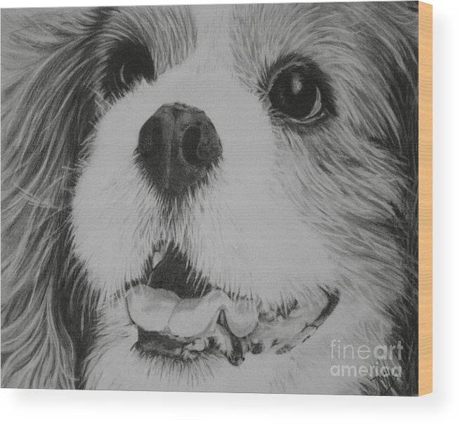 Dog Wood Print featuring the drawing Cavalier by Terri Mills