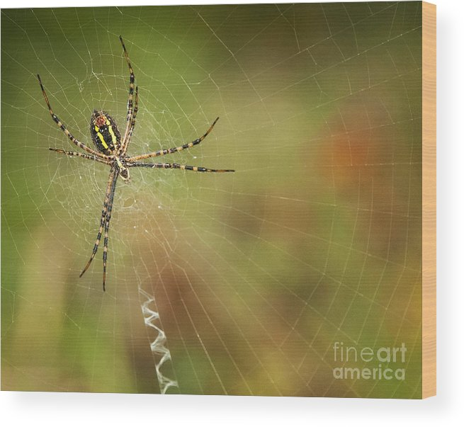 Spider Wood Print featuring the photograph Itsy Bitsy Spider by Claudia Kuhn