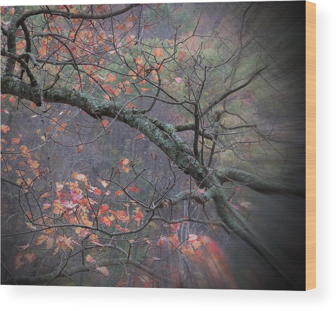 Landscape Wood Print featuring the photograph Magical Fall by Al Campoli