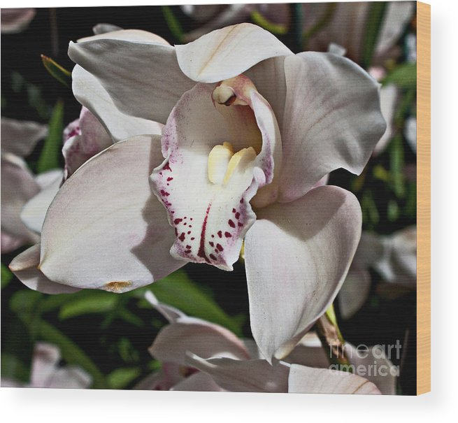 Floral Wood Print featuring the photograph Petals by Robert Sander