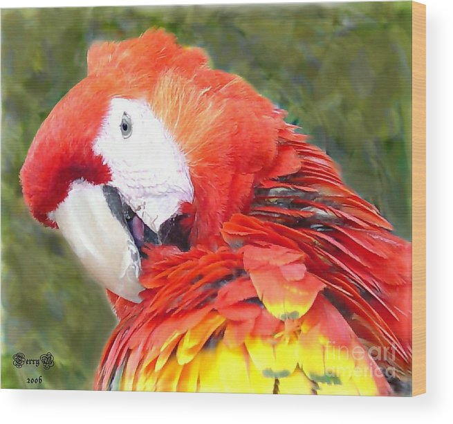 Bird Wood Print featuring the photograph Parrot by Terry Burgess