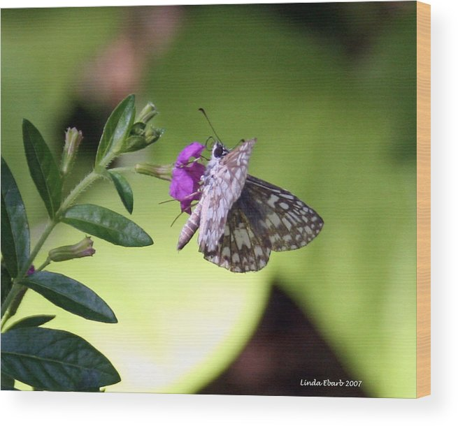 Insect Wood Print featuring the photograph Butterfly On Heather by Linda Ebarb