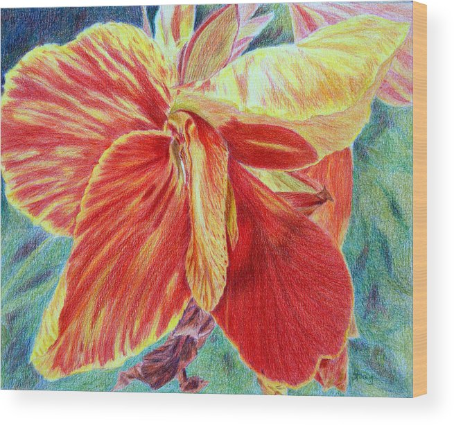 Canna Lily Wood Print featuring the drawing Canna Lily by Tina Storey