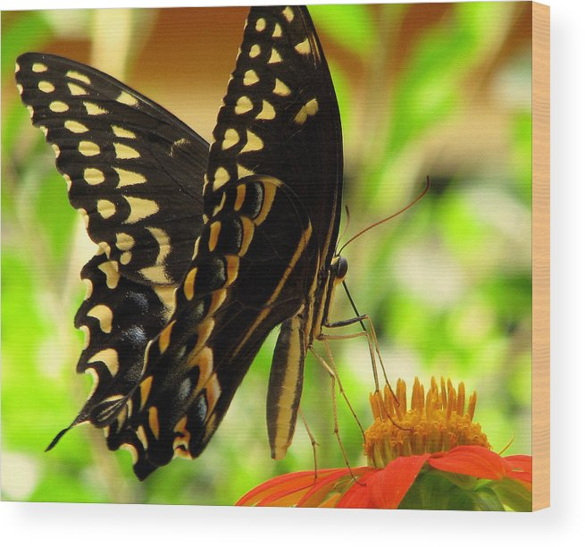Butterfly Wood Print featuring the photograph Drinking From A Straw by Dottie Dees