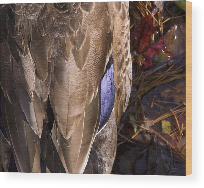 Birds Wood Print featuring the photograph Duck by Steve Kenney