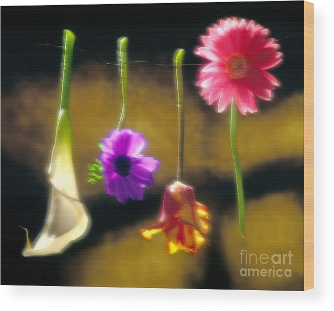 Tulip Wood Print featuring the photograph Hanging Flowers by Tony Cordoza