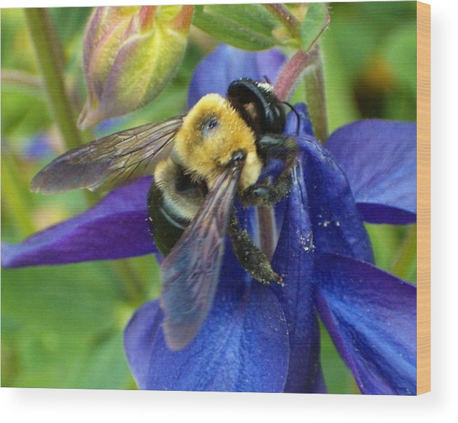 Bee Wood Print featuring the photograph I Never Knew by Sara Raber