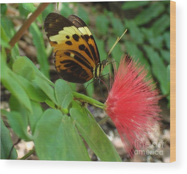Butterfly Wood Print featuring the photograph Nature by Robyn Leakey