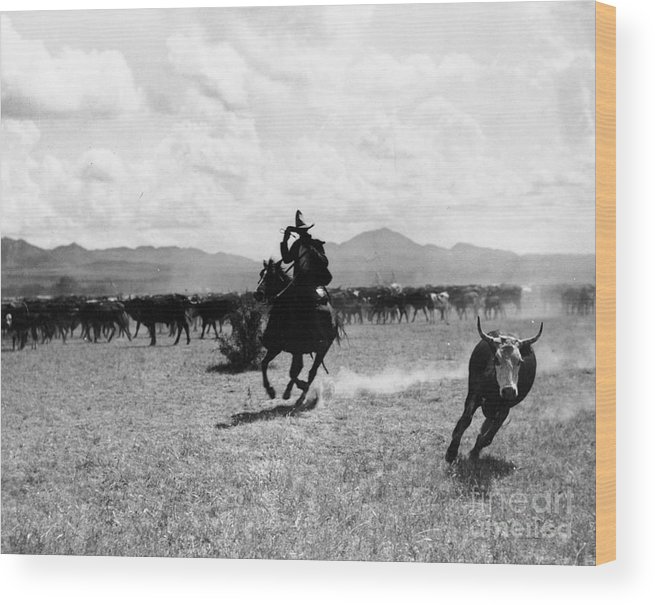 Raguero Cutting Out A Cow From The Herd (b/w Photo)wild West; Stetson; Cattle; Gallop; Round-up; Cowboy; Herding; Cattle; Plains; Old West; Western; Horse; Horseback; Rider; Riding; American Landscape; Atmospheric; Rustler Wood Print featuring the photograph Raguero Cutting Out A Cow From The Herd by Raguero cutting out a cow from the herd