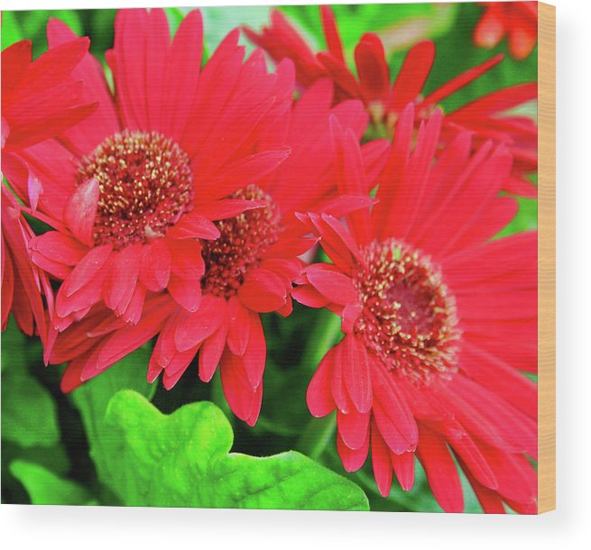 Red Wood Print featuring the photograph Red And Green by Keith Kadwell