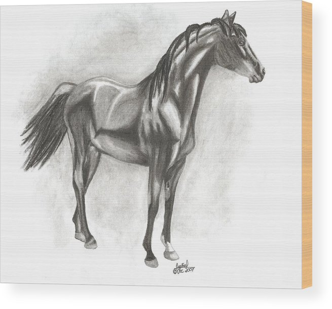 Zimmy Portrait Horse Wood Print featuring the drawing Zimmy by Crystal Suppes