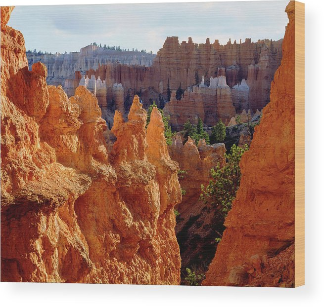 America Wood Print featuring the photograph Usa, Utah, Bryce Canyon National Park by Jaynes Gallery