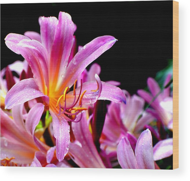 Flower Wood Print featuring the photograph Belladonna Lilies by Deena Stoddard