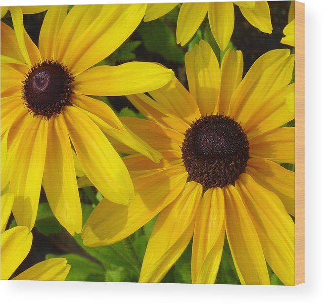 Black Eyed Susan Wood Print featuring the photograph Black-eyed Susans Close Up by Suzanne Gaff