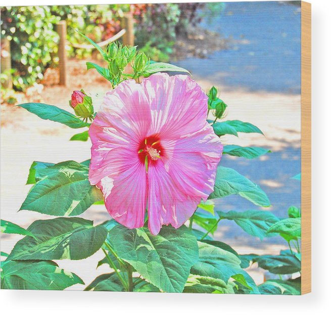 Fun Montana Girl Wood Print featuring the photograph Bright Flower by Christina Jo Horton