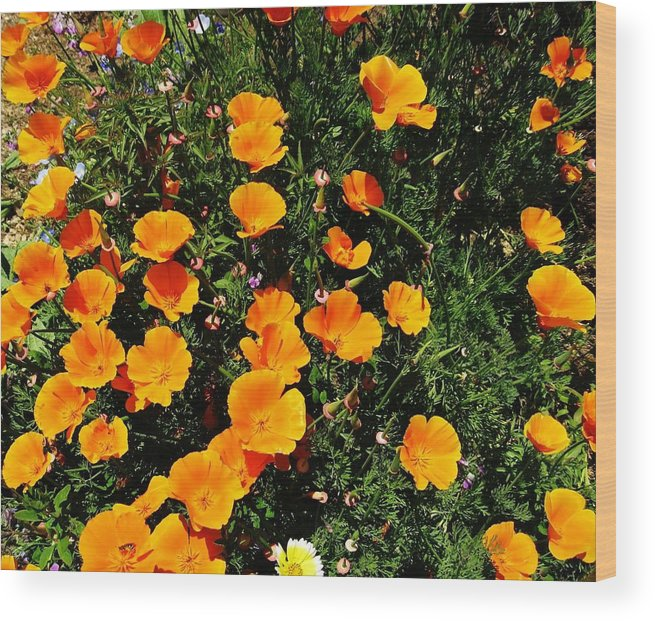 California Poppies Wood Print featuring the photograph California Poppies by Mimi Saint DAgneaux
