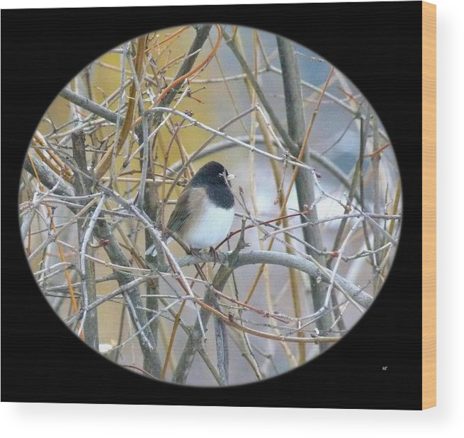 Dark-eyed Junco Wood Print featuring the photograph Dark- Eyed Junco by Will Borden