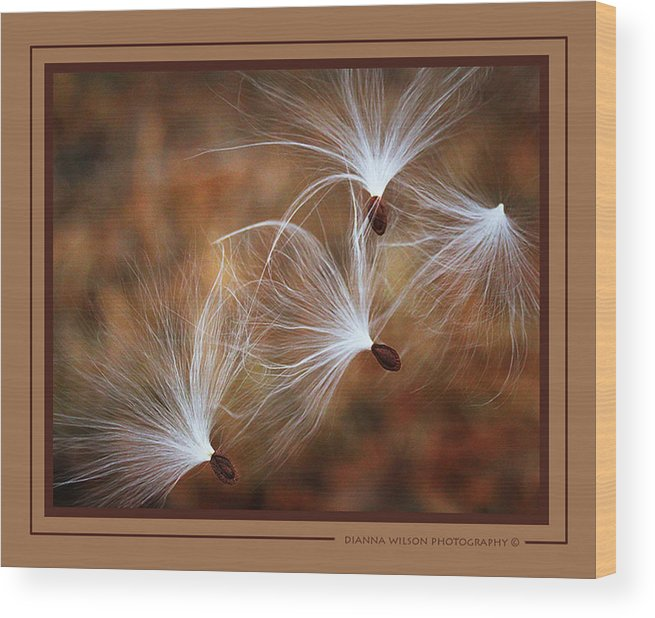 Milkweed Wood Print featuring the photograph Hang On Tight by Dianna Wilson
