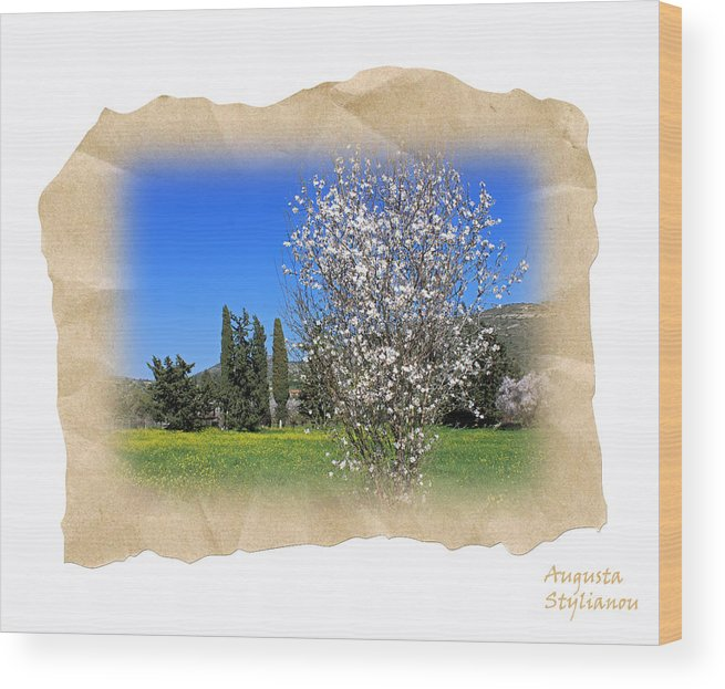 Augusta Stylianou Wood Print featuring the photograph Spring In The Paper by Augusta Stylianou