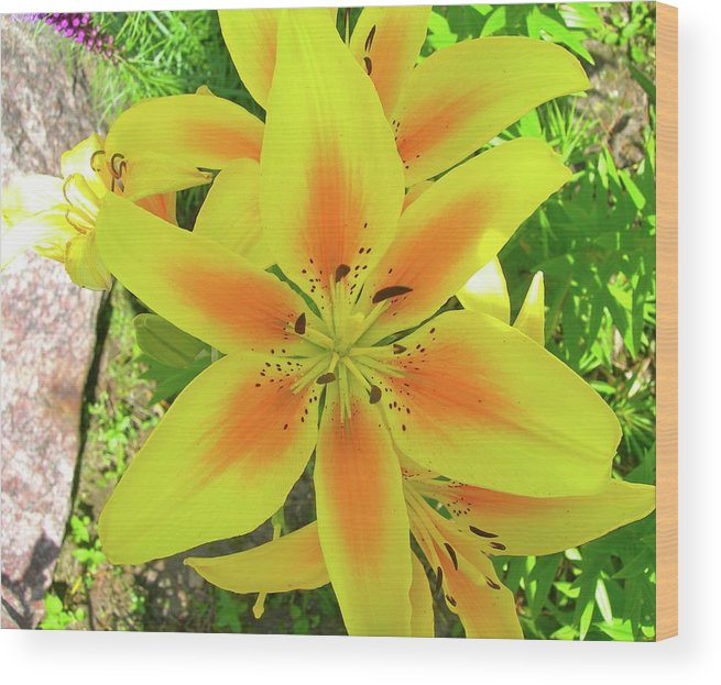 Lilies Wood Print featuring the photograph Beautiful Dreamer by Randy Rosenberger