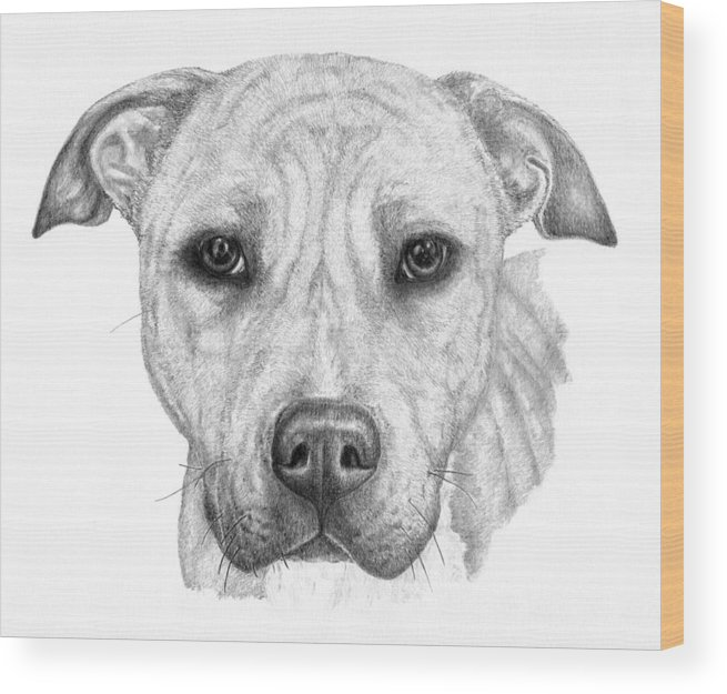 Pencil Sketch Wood Print featuring the drawing Chance by Deanna Maxwell