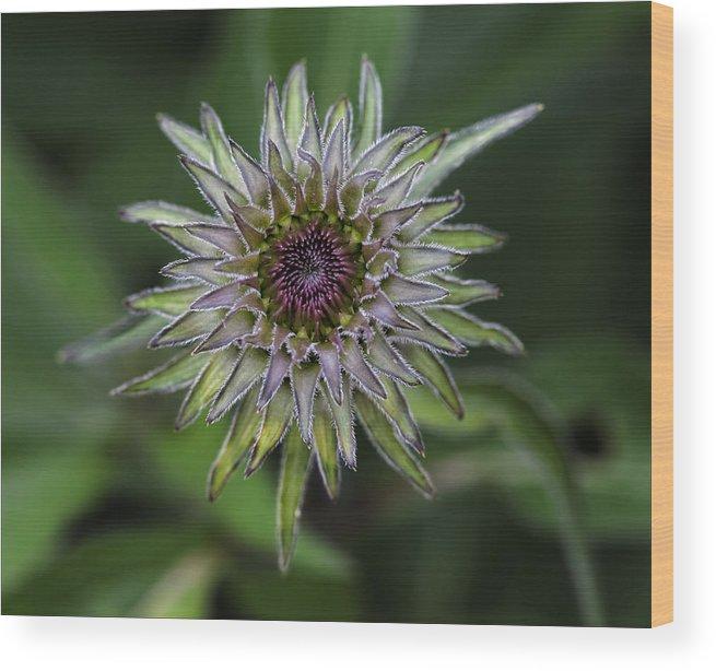 Flower Wood Print featuring the photograph Introspection 1 by Robert Ullmann