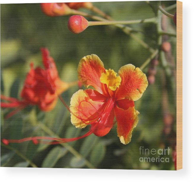 Nature Wood Print featuring the photograph Exotic Story by Valia Bradshaw