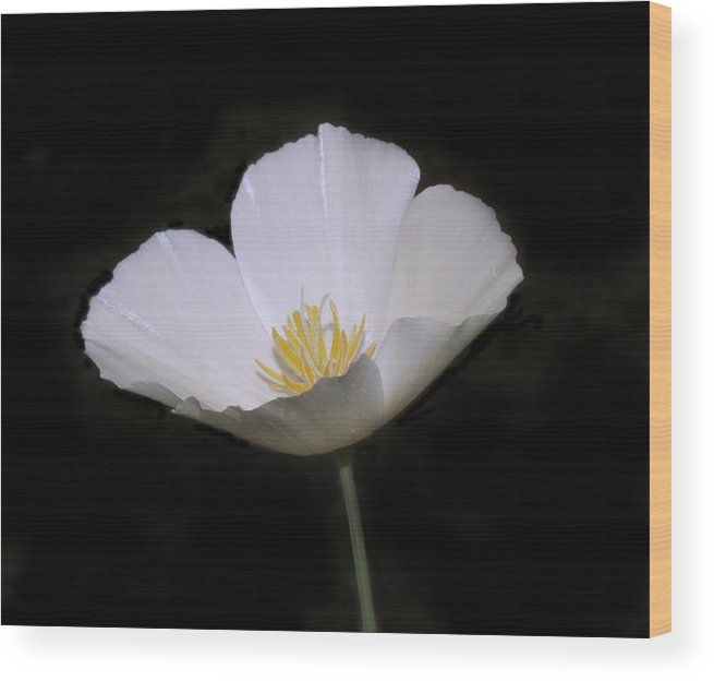 Flower Wood Print featuring the photograph white Flower by Masami Iida
