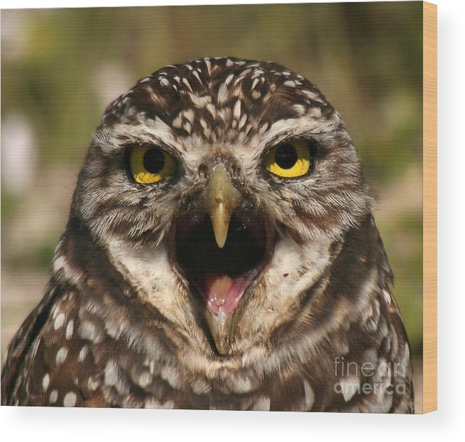 Owl Wood Print featuring the photograph Burrowing Owl Eye To Eye by Max Allen