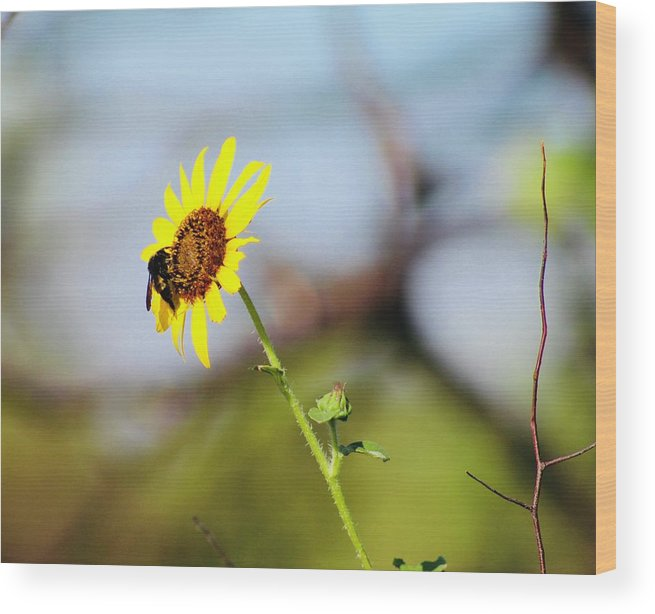 Flower Wood Print featuring the photograph Buzy Bee by Suzette Munson
